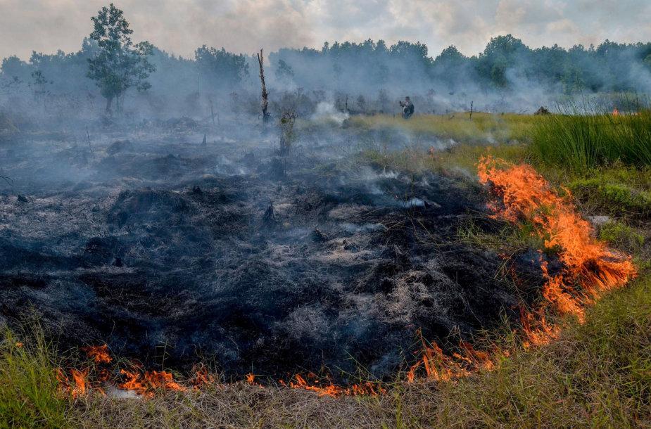 Miško gaisras Indijoje