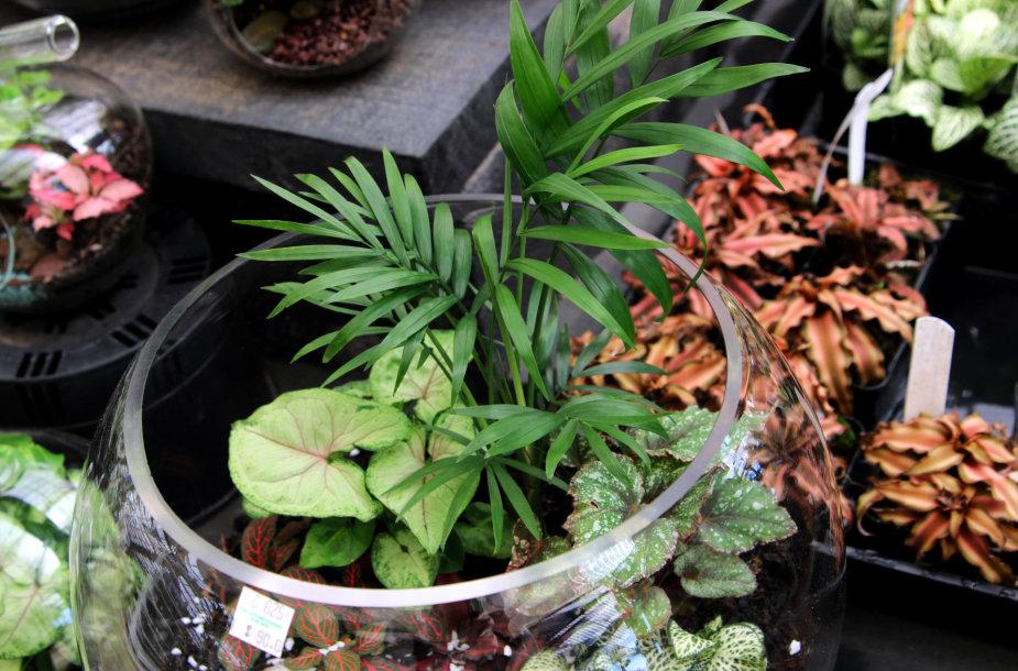 Terariumas su augalais.