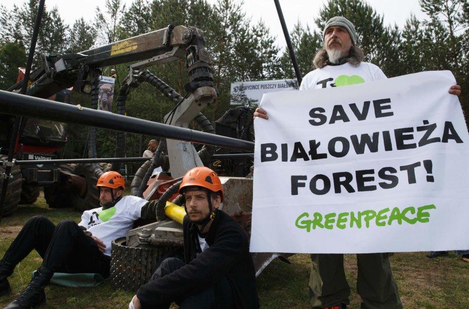 Lenkijos aktyvistai protestuoja prieš didelio masto kirtimus Belovežo girioje