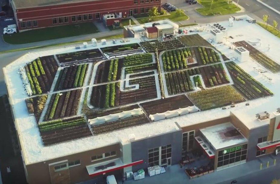 Kanados parduotuvė prekiaus ant savo pastato stogo užaugintomis daržovėmis