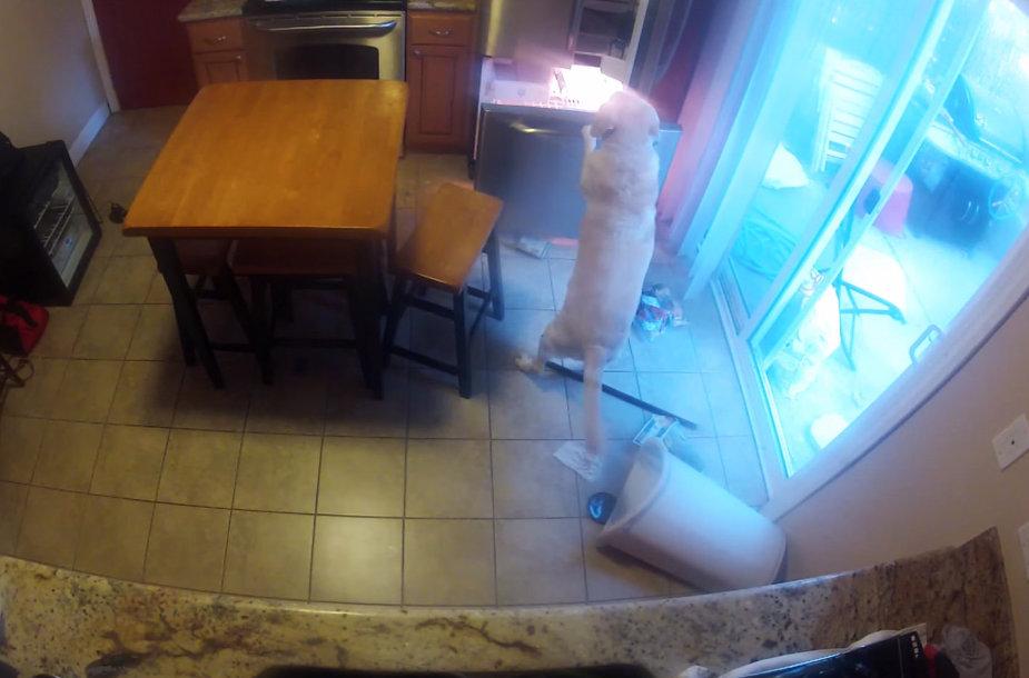 Šuo atsidaro šaldytuvą