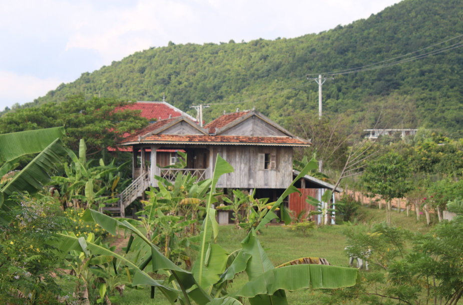 Kambodžos pipirų plantacijos