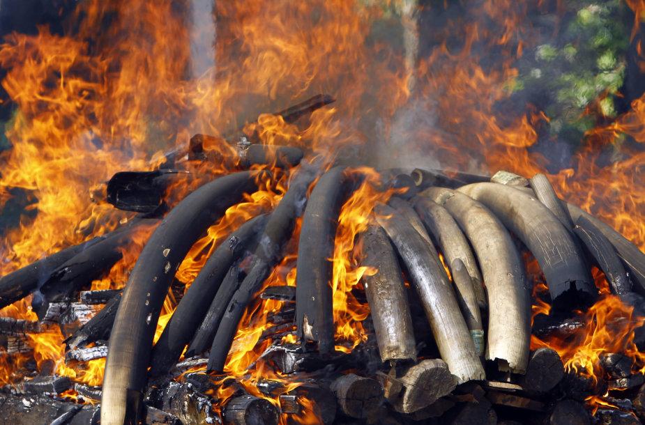 Mianmare sudeginta laukinių gyvūnų dalių už 1,3 mln. dolerių