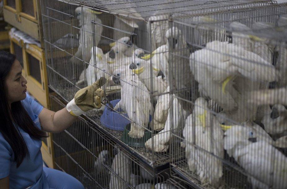 Filipinai konfiskavo šimtus kontrabanda atgabentų gyvūnų