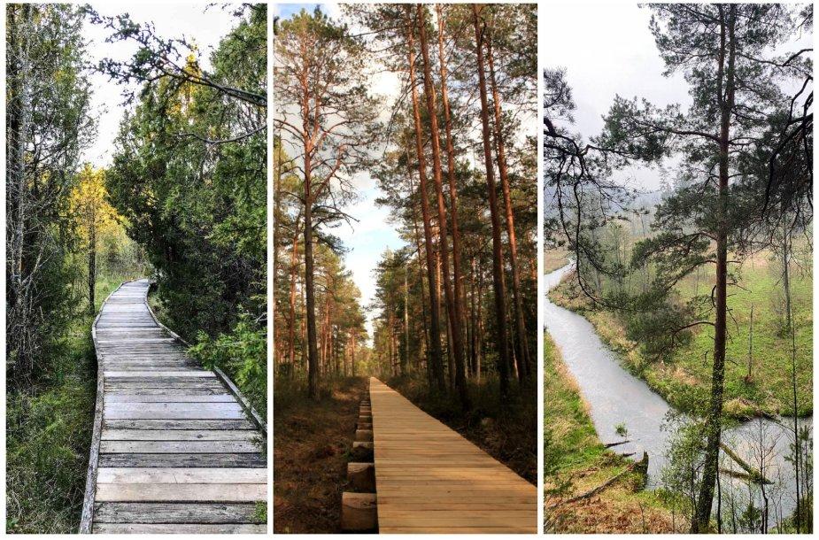 Gražiausi pažintiniai takai Lietuvoje