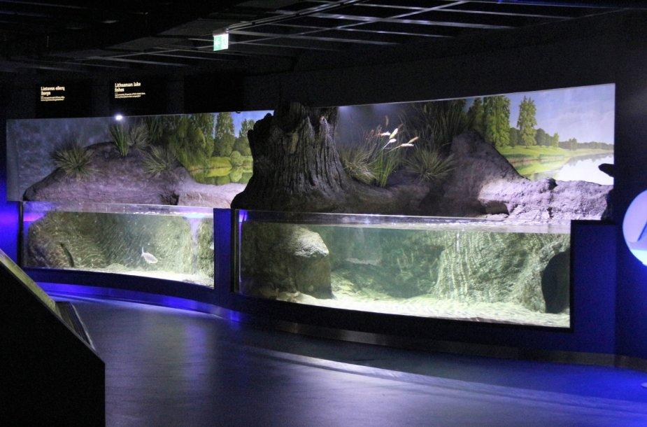 Iš pagrindų atnaujintas Lietuvos jūrų muziejaus akvariumas kviečia naujai pažinti povandeninį pasaulį.