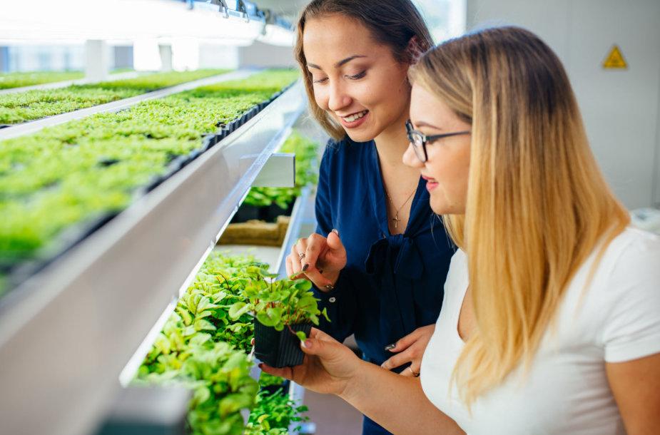 Naujoji tarptautinė studijų programa atvers darbo rinkas visame Baltijos regione
