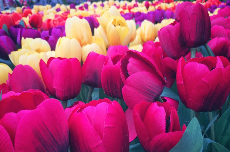 Dirbtinės tulpės