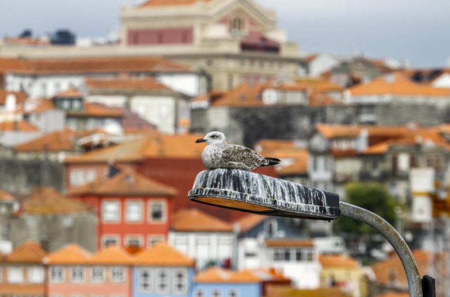 Ruduo Portugalijoje, Porto mieste