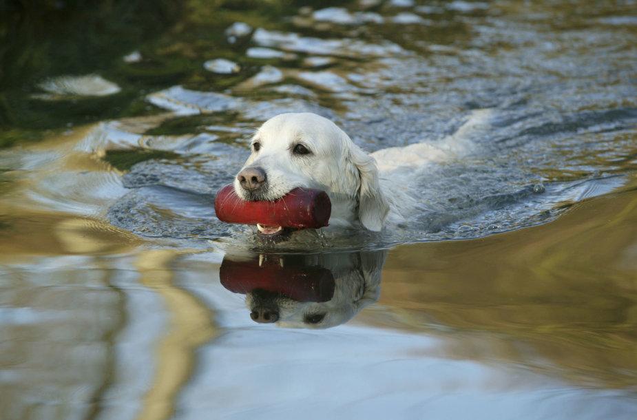 Šuo plaukia