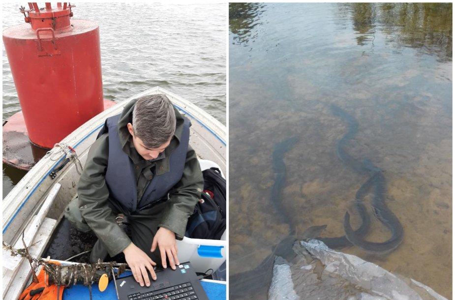 Duomenų nuokrovimas iš akustinio signalo imtuvo, sumontuoto Nemuno upės žemupyje ir telemetriniais siųstuvais paženklintų ungurių paleidimas Žeimenos upėje.