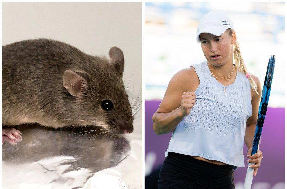 Tenisininkams liepta nemaitinti pelių