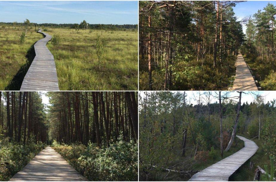 Pėsčiųjų takai per Lietuvos pelkes