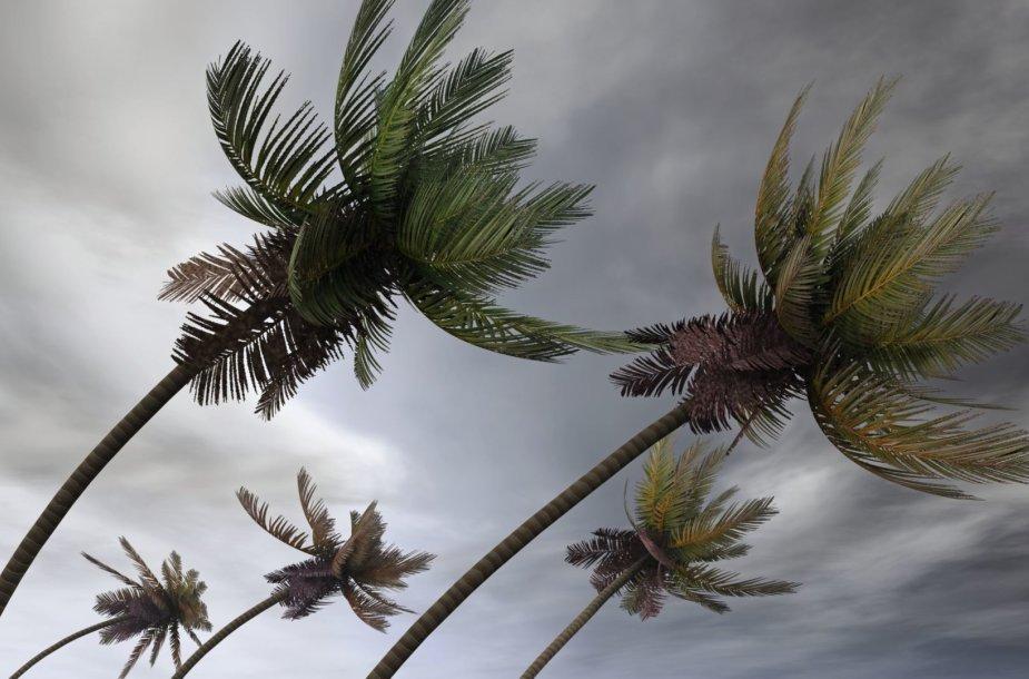 Stiprus vėjas atogrąžose