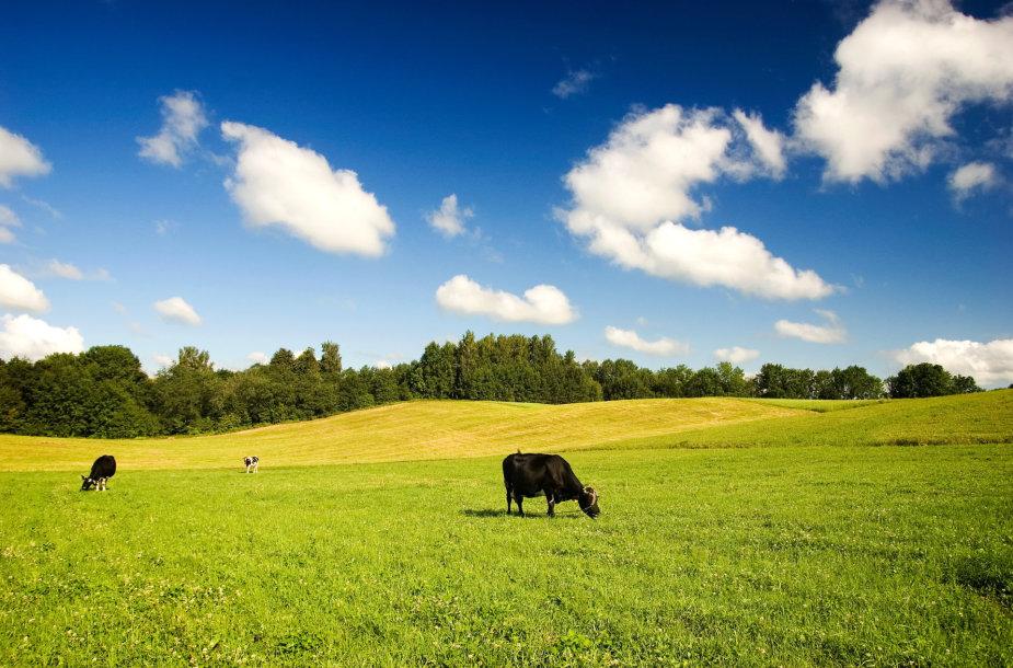 Laukai ir gyvūnai