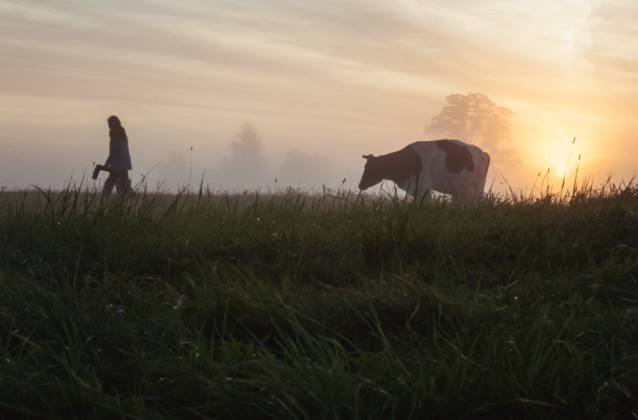 Kaip Dubingiuose gimsta sūriai
