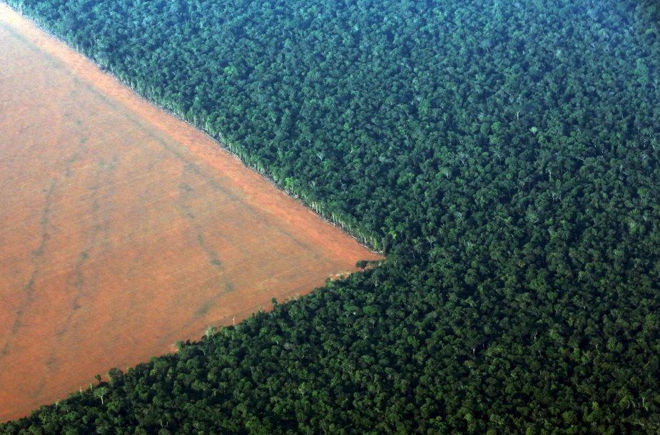 Iškirsti atogrąžų miškai Brazilijoje