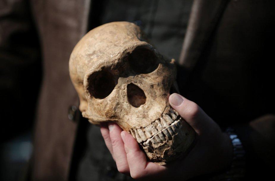 Maroke rastos fosilijos šiuolaikinių žmonių rūšį pasendino 100 tūkst. metų