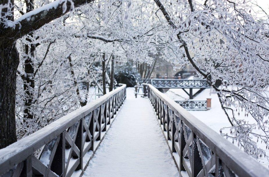 Šalčio sukaustyti Vilniaus peizažai atskleidė žiemos grožį