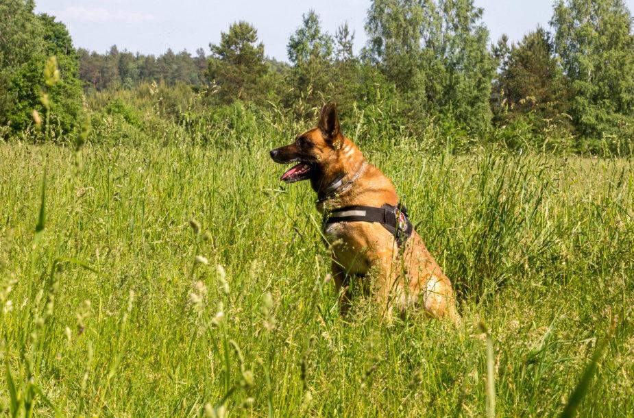 VSAT tarnybinių šunų meistriškumo čempionatas