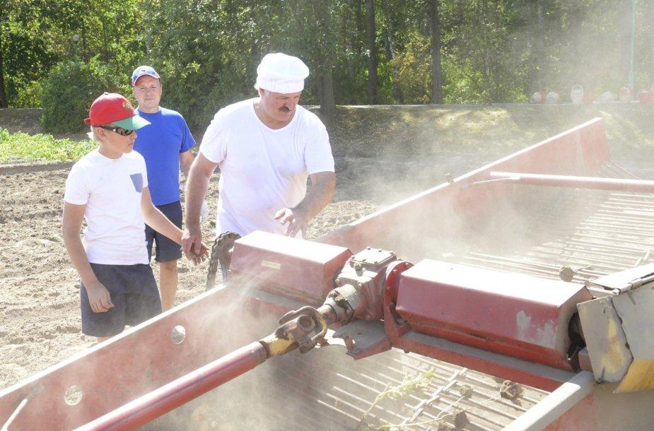 Aliaksandro Lukašenkos sūnus Kolia su tėčiu nurenka bulvių derlių