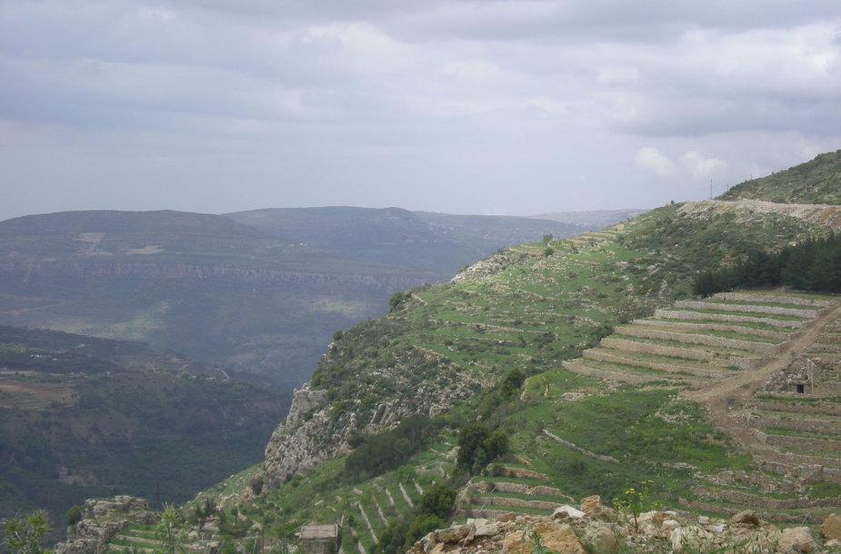 Libano gamta