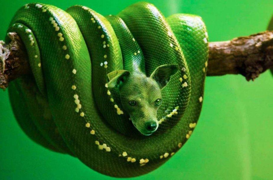 Šuns ir gyvatės hibridas