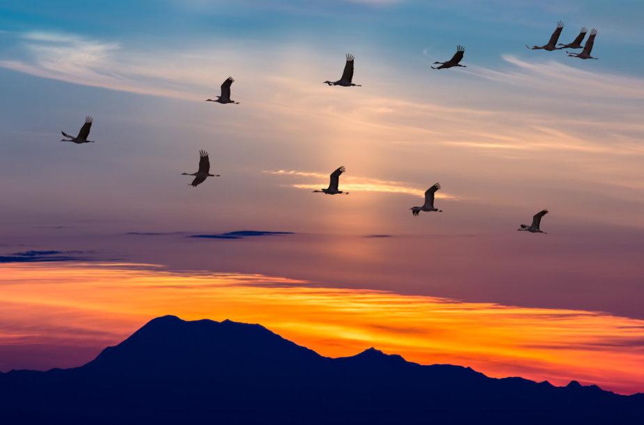 Paukščiai