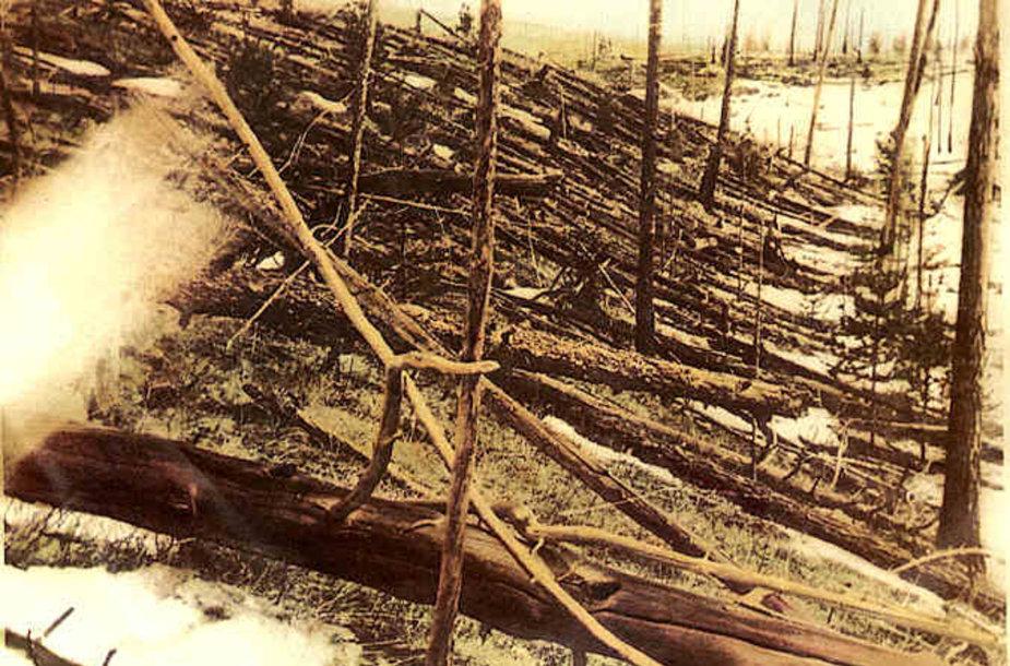 Tunguskoje sprogimo išversti medžiai