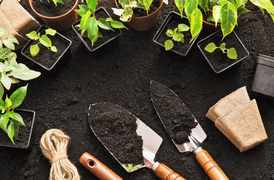 Augalų persodinimas