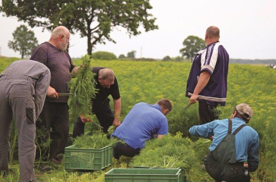 Šiuo metu dažnas šalies ūkininkas susiduria su darbo jėgos trūkumu