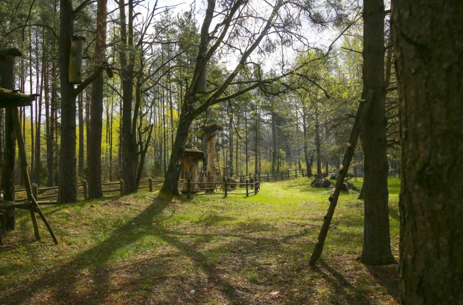 Drevinė bitininkystė Dzūkijoje