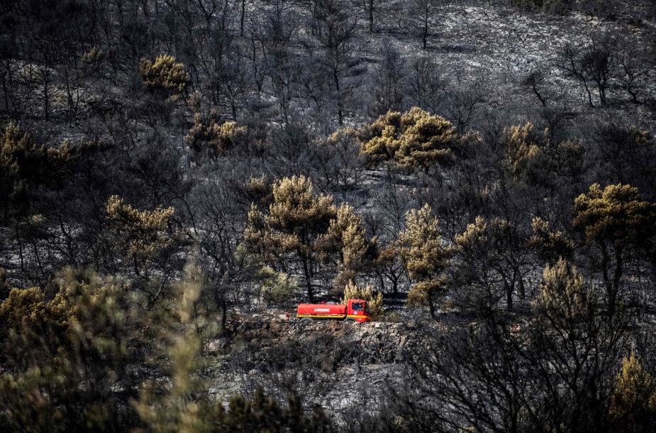 Graikijos saloje netoli Atėnų siaučia smarkus gaisras
