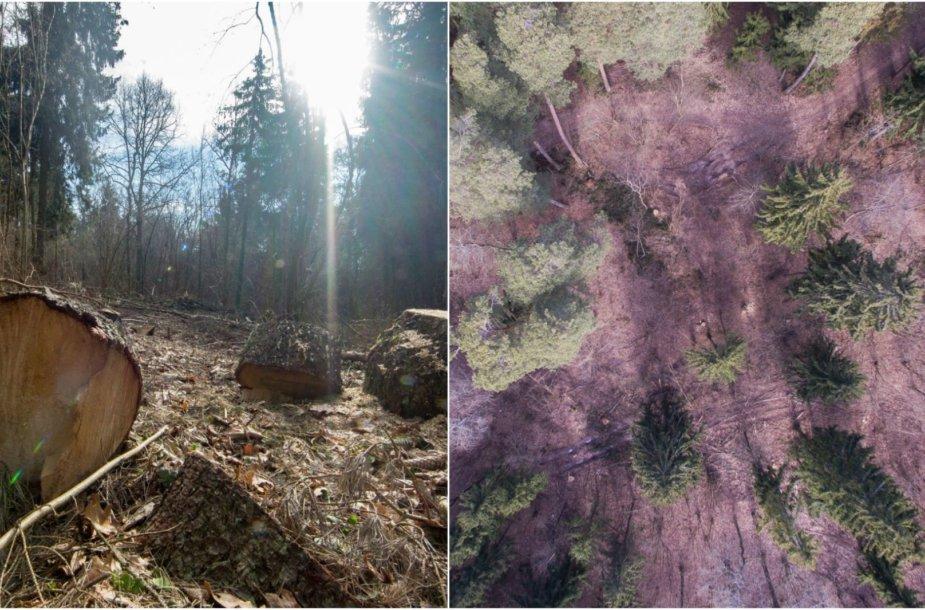Kulautuvos bendruomenę neramina jau keletą metų gana gausiai  kertami miškai