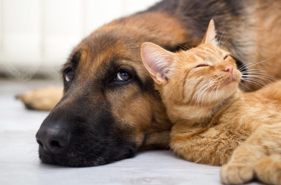 Šuo su kate.