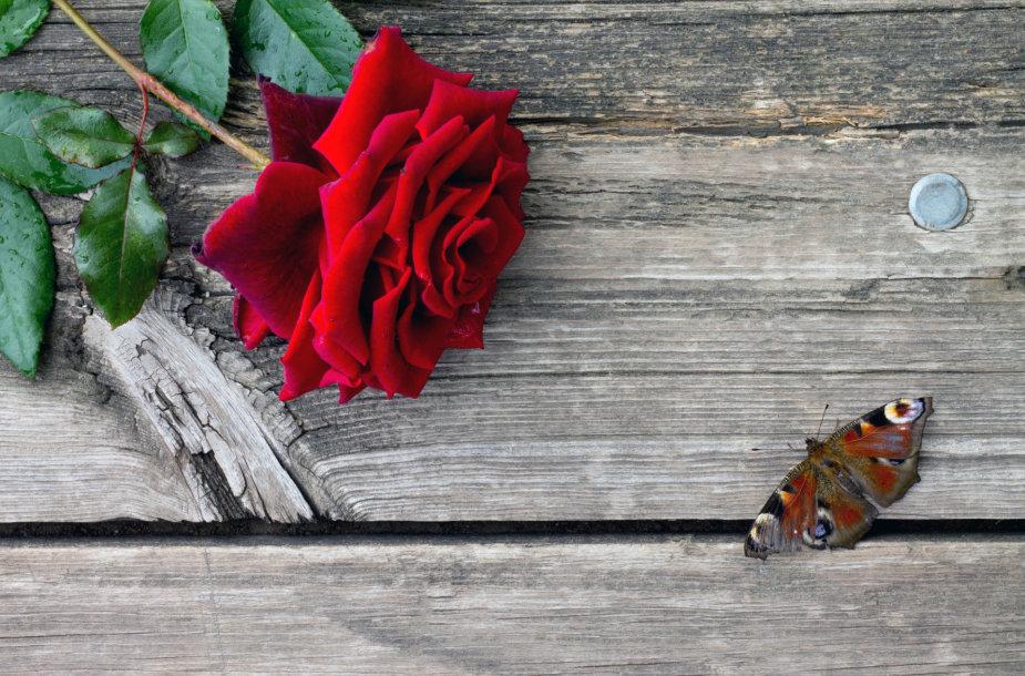 Rožė ir drugelis