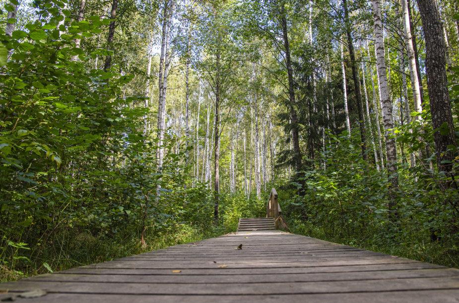 Į Žuvinto biosferos rezervatą ateina ruduo. Buktos miškas