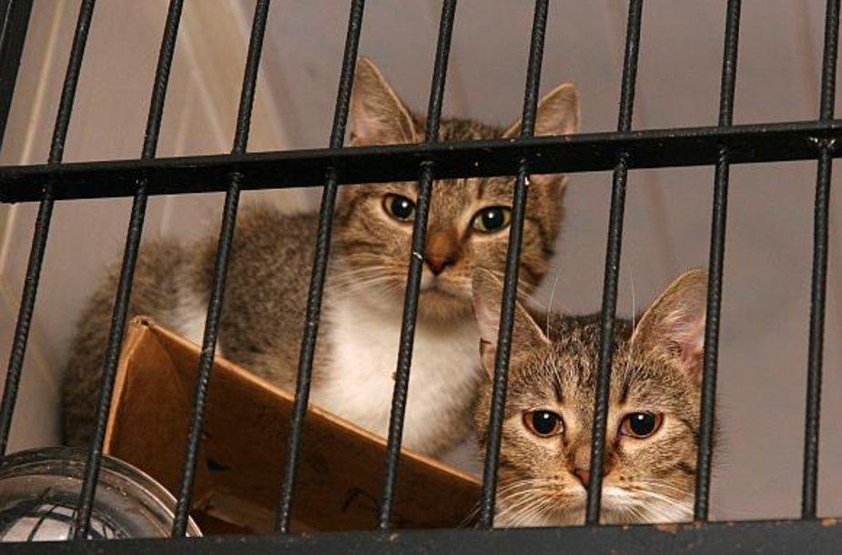 Uostamiesčio kiemuose benamių kačių nestinga. Niekam neužsiimant jų gaudymu, šių gyvūnų gretos tik gausėja.