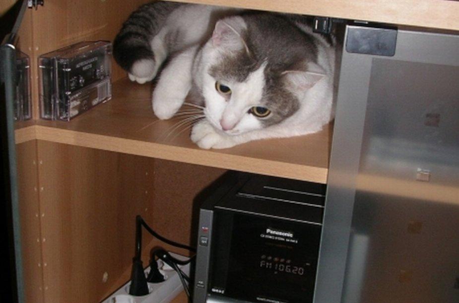 Kačių klausa yra tris kartus geresnė už žmonių