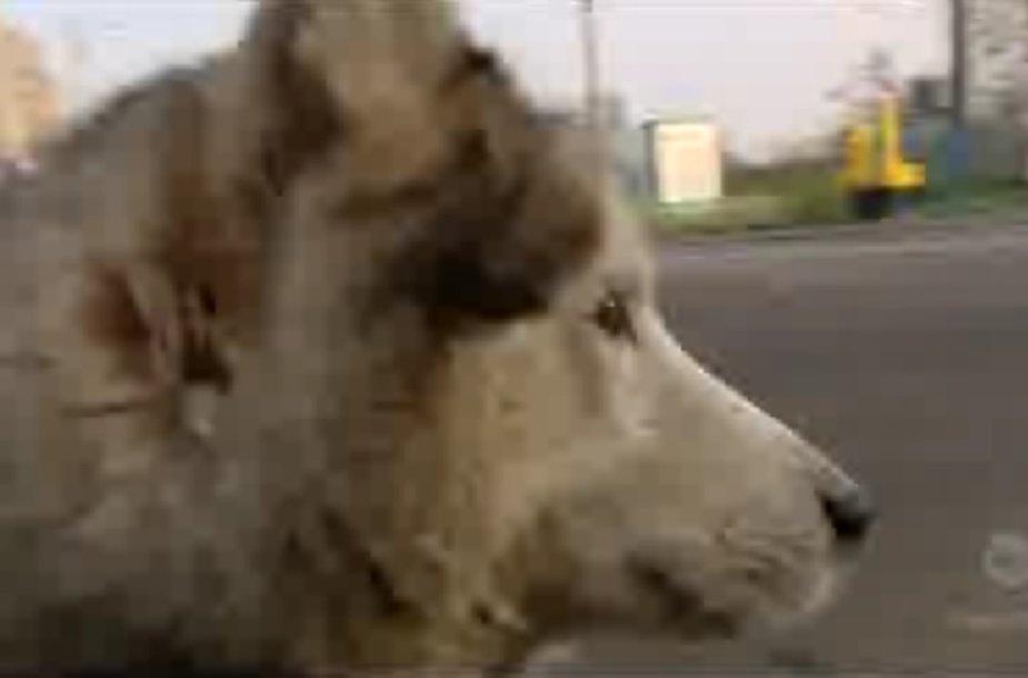 Šuo Maxas nepavargsta laukti savo šeimininko, prieš metus išvykusio į Norvegiją.
