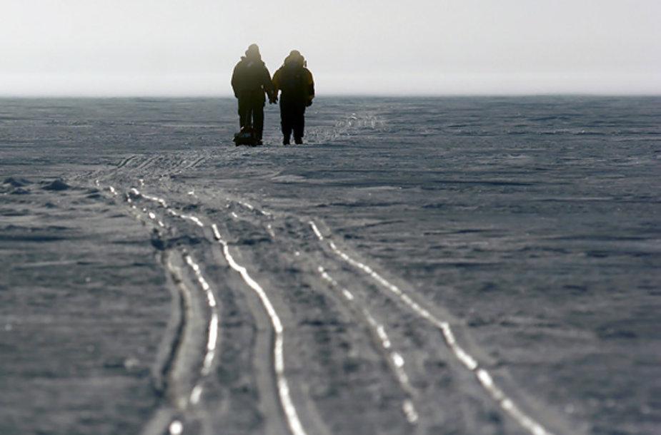 Sniego rogių vėžios ant Kuršių marių ledo