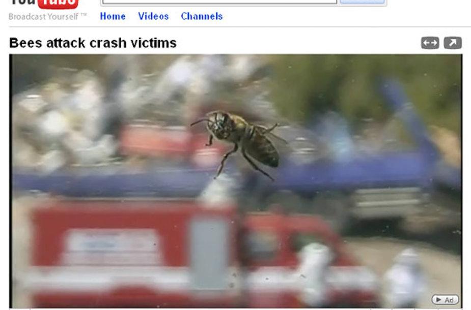 Bitės sutrukdė gelbėjimo operaciją