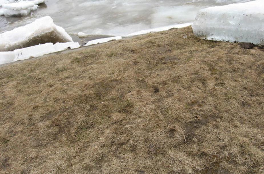 Ledo lytis pakrantėje