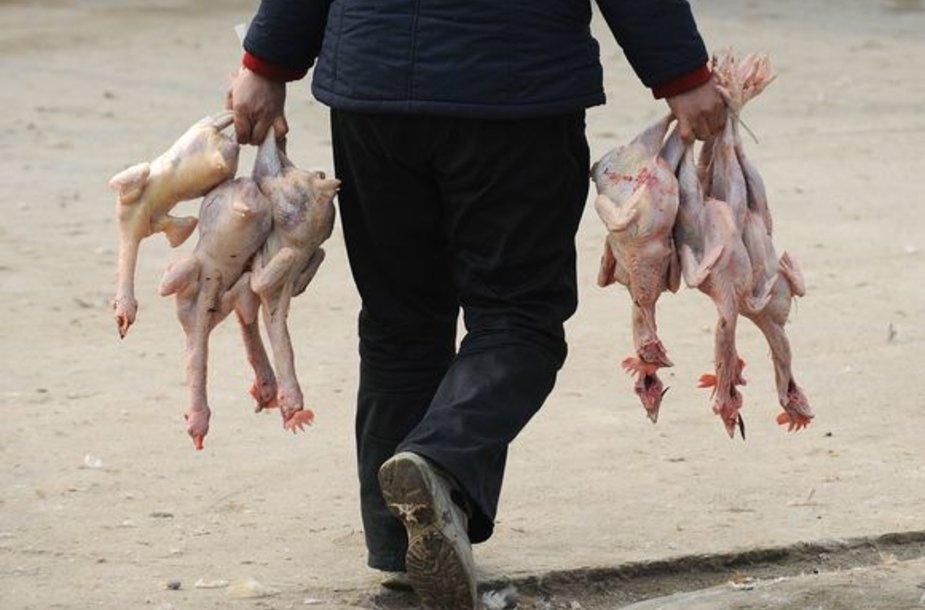 Paukščių gripo virusas pasiglemžė dar vieną auką