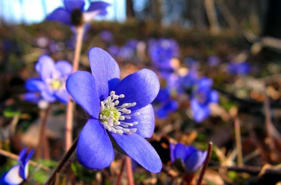 Ei, ar jūs užuodžiat tikrą pavasarį?!