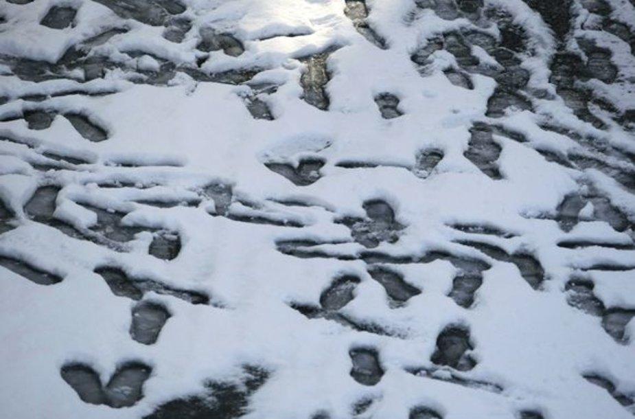 Žiemiški antspaudai