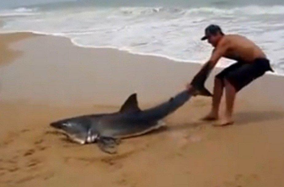 Išgelbėtas Didysis baltasis ryklys