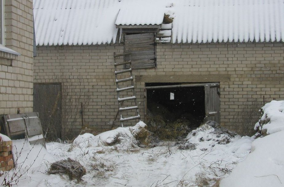 Nekūrentame apšnerkštame mūrinuke – du lavonai, ūkiniame pastate – nuo bado ir šalčio kritusi karvė ir leisgyvė telyčia.