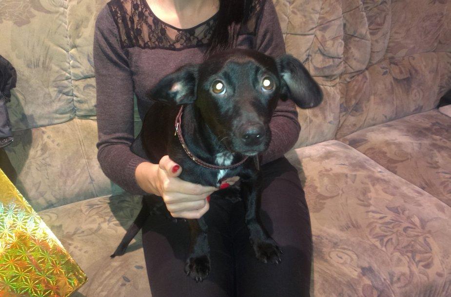 Kaune rastas šuo