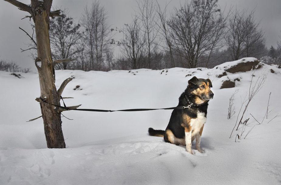 Beglobis žiemą